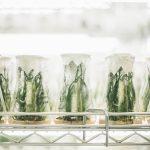 Sur une étagère en fer, sont posés des flacons de chimie contenant de petites plantes vertes.